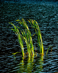 _DSC5614 (pnther60) Tags: blueridgeparkway floraandfauna peaksofotter