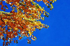 Foliage & Sky (&) Tags: autumn laub herbst niceweather
