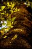"● ""Some people make the world special just by being in it."" (»✖BeHiNaZ✖«) Tags: autumn tree fall leaves leaf nikon dof bokeh jungle textured goodluck درخت northofiran پاییز golestan گلستان d90 allofthem ilovemyfriends جنگل برگ tomyfriend بوکه congratshon بهنازحاتمی behnazhatami sayyedebehnazhatami سیدهبهنازحاتمی igotprohahad loadsofl♥venoushin ialwaysthankgodthatihavefriendslikeu happybokehweekendd yousodeservebeingpro yourfriendsloveyoutooallofthem"