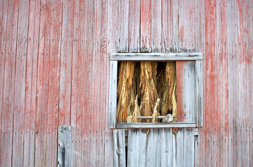 Tobacco Window