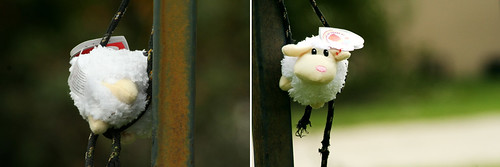 stuck sheep diptych