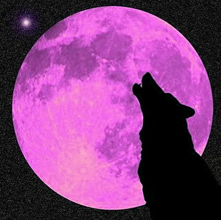 Wolf howling at purple moon