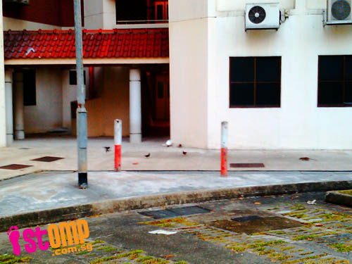 Bold rats at Kim Keat Link even emerge in broad daylight
