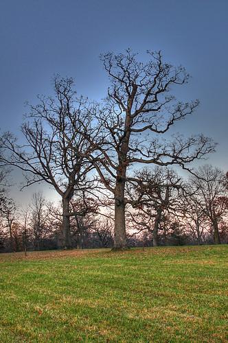 Millennium White Oak HDR