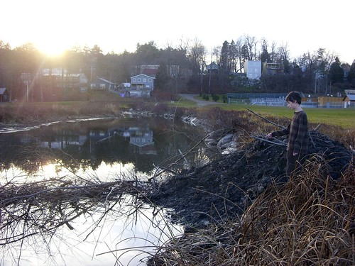 Peter with the beaver lodge & dam on the brook