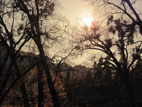 Leaves in the valley, shot through my glacier glasses (Yosemite National Park)