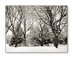 (Aldo Risolvo) Tags: trees winter blackandwhite bw snow chicago illinois firstsnow itasca naturescenes tamron2875f28 aldorisolvo canon5dmk2