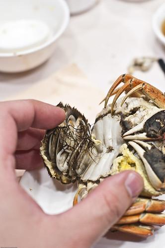 Shanghai Hairy Crab (Female)
