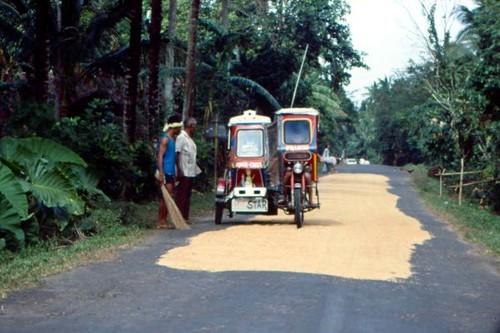 Roadway Rice Harvest, Albay Province