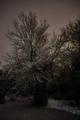 Midnight Snow (Sebastian Anthony) Tags: longexposure winter shadow england sky snow tree silhouette garden sussex frost ivy pollution