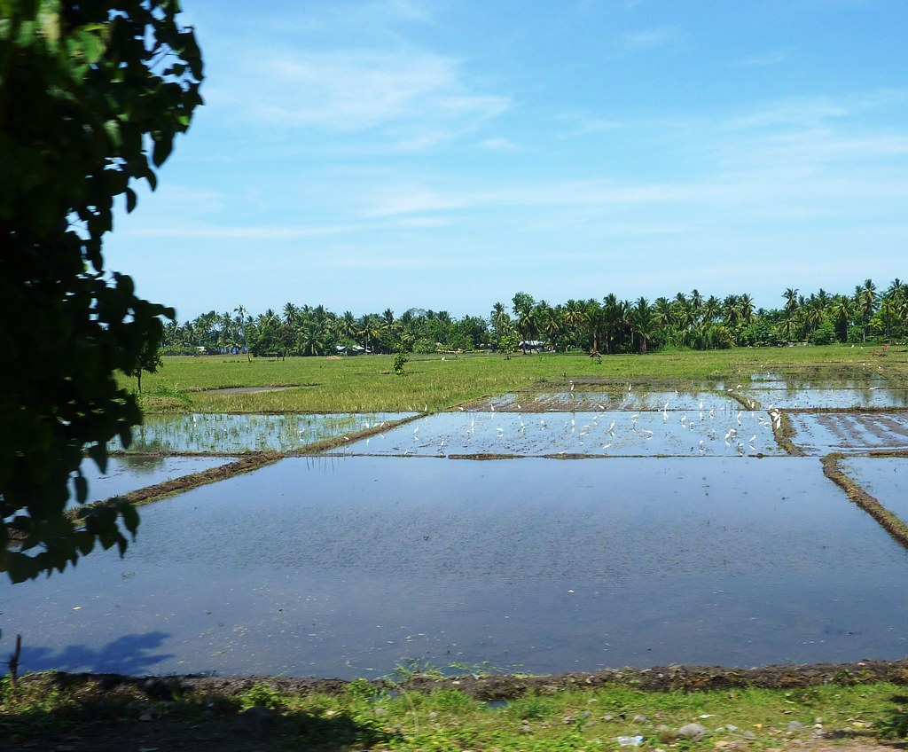 Mindanao-Butuan-Cagayan (42)