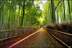 Trail (katepedley) Tags: longexposure trees green japan forest canon lights kyoto path tripod bamboo motorbike arashiyama   5d  kansai trial 1740mm nihon tenryuji