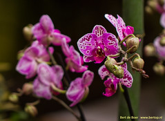 Flowers in bright colors (Bert de Boer) Tags: flowers bright colors flower flouwers bertdeboer bertop bloemen groningen garden tuinbloemen