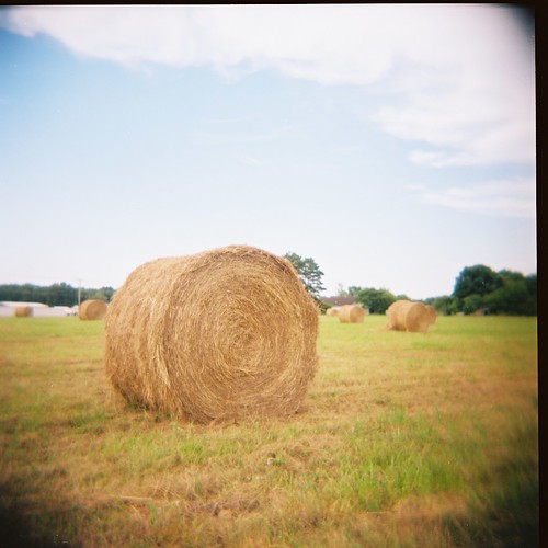 hay! check out my holga.