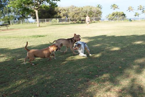 Dog Park July 3rd