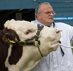 Royal Agricultural Show 2009 (dr syntax) Tags: show people cow farmers candid farming royal bull agriculture livestock agricultural