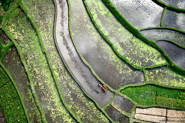 Rice terraces, Tirtaganga, Bali