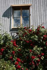 IMG_2247 (piaktw) Tags: summer sweden vaxholm