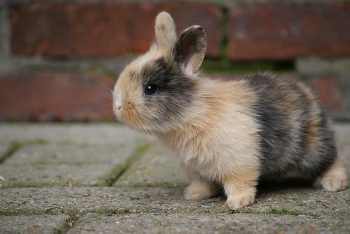 フリー画像| 動物写真| 哺乳類| 小動物| 兎/ウサギ|       フリー素材|