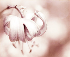 (e.kristina) Tags: flower texture nature pinkglow specialpicture coffeeshopactions