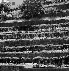 Efficiency (espri fotografeert) Tags: bw white black portugal rio port river graphic wine valley douro zwart wit grape vinho wineyard wijn wijngaard druiven vallei