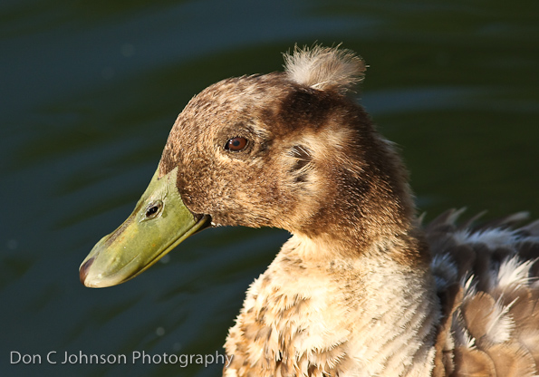 duckpond-115