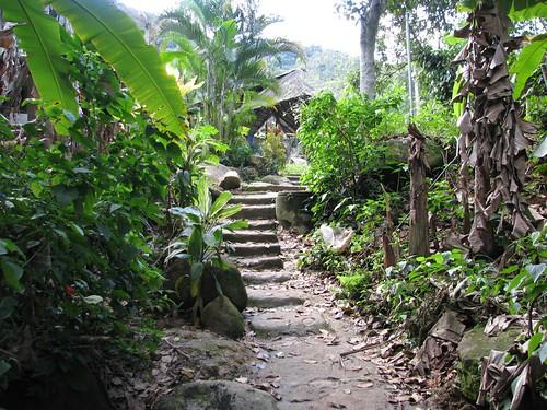 steps in jungle