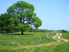 le chemin (ktLaurel) Tags: france tree countryside trail paysage chemin verdure paisible
