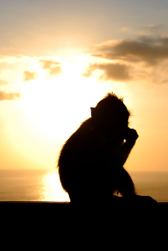 小猴子&夕陽