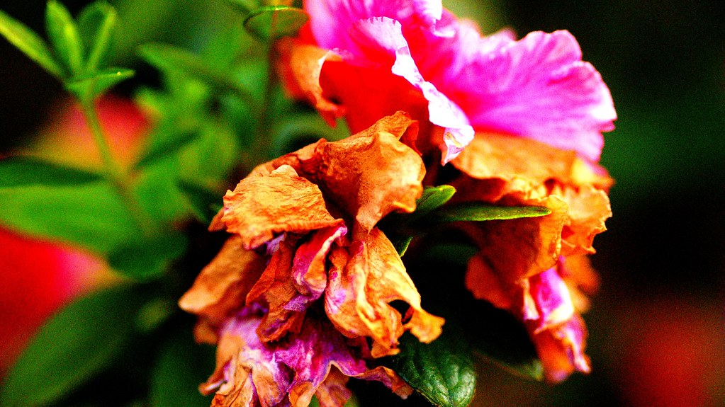 Una flor cada mañana...