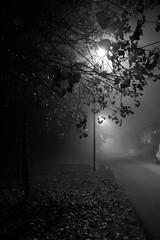 Untitled (Tiziano Luciani) Tags: mist fog canon lago valle ferrara nebbia acqua emiliaromagna foschia nazioni tizio deltadelpo eos450d the4elements canoneos450d lidodinazioni lucianitiziano borgomanaraborgo manaralagodellenazioni