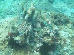 小琉球海底,珊瑚被魚網纏繞後死亡
