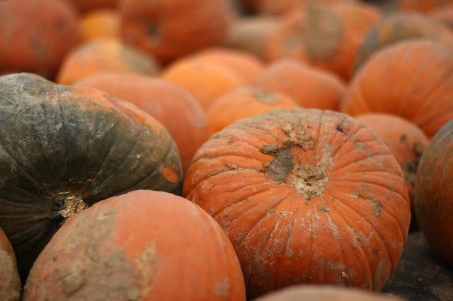 halloween pumpkin kürbis