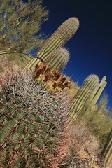 IMG_9549 (simon_travelboy) Tags: arizona tucson saguaronationalpark