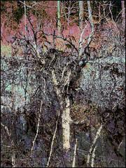 The Winter Tree (Tim Noonan) Tags: autumn tree art digital forest photoshop pyramid manipulation legacy mosca hypothetical tistheseason newreality sharingart maxfudge awardtree maxfudgeexcellence miasbest maxfudgeawardandexcellencegroup daarklands flickrvault trolledproud trolledandproud magiktroll