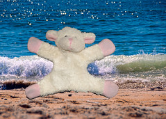 Jump - the waters coming (Singing With Light) Tags: november blue autumn jump waves sheep pentax 2009 fridgemagnet magnetic springlake jjp k200d photochallengeorg bahbahra 2009challenge 2009challenge318 jump20092009challenge318autumnjjpk200dnovemberstreetpentaxphotochallengephotochallengeorgphotochallenge2009