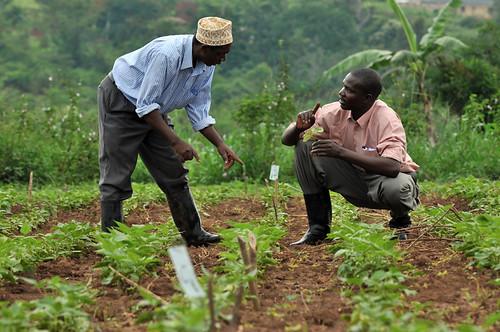 uganda field trials2_lo