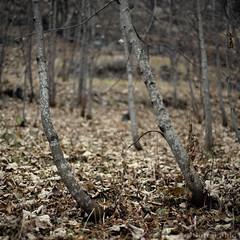 Autumn 2009 (Fabio Cor - PARMA) Tags: color tree fall foglie nikon italia photographer parma mm nikkor 50 albero autunno colori 2009 fotografo salsomaggiore d700 fabiocor
