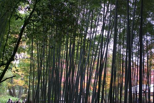Sagano bamboo street (嵯峨野竹林)