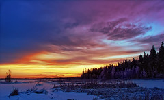Nordic colours (Antti-Jussi Liikala) Tags: winter light sunset red white lake yellow forest suomi finland d50 dark landscape evening frozen nikon purple horizon north nordic polar scandinavian seinjoki