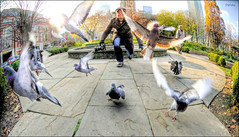 It's pigeon-hunting season. (Daifuku Sensei) Tags: nikon fisheye stjamespark stjamescathedral hdr d300 photomatix singleexposurehdr nikon105mmf28dx pigeonpoopeverywhere bokehmucholoco