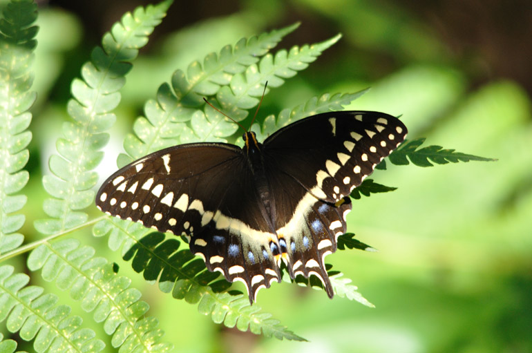 butterfly_0203_2323