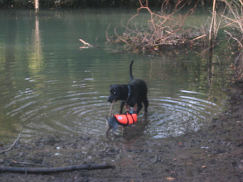 retrieving again