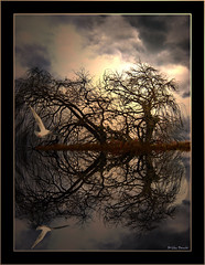 Do not think.... (Mi_Per) Tags: blue trees light sky lake tree bird art texture nature water colors clouds photoshop canon reflections dark mirror mood experiment places manipulations fantasy moment magical doves feelings silhouetes trska