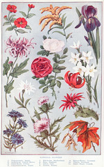National Fowers page 1052-1053