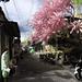 Street @ Kauman Batik Village, Solo (Infrared)