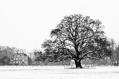 Trees and villa @ 's Gravenland (PaulHoo) Tags: hilverbeek spanderswoud s gravenland holland netherlands winter landscape nature 2017 snow blackandwhite bw monochrome contrast tree lonely villa building house