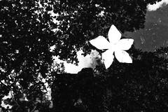 R0022821 (kenny_nhl) Tags: ricoh road rain grd grdiv grd4 provoke tree street streetphotography dark surreal streephotography shadow snap shot scene visual 28mm black blackwhite bw blackandwhite photo explore explored life
