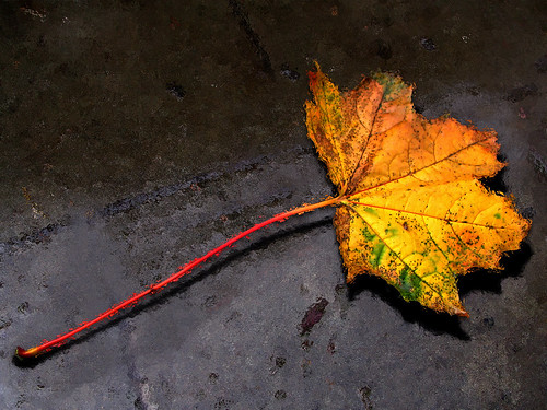 Wallpapers-room_com___Autumn_Leaf_by_grafixeye_1600x1200