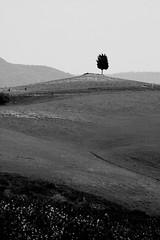 Le colline hanno gli occhi (Xelisabetta) Tags: tree canon hill tuscany pienza toscana albero collina eos400d xelisabetta elisabettagonzales